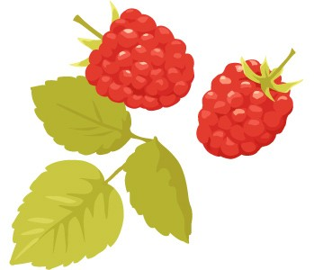 berry_l