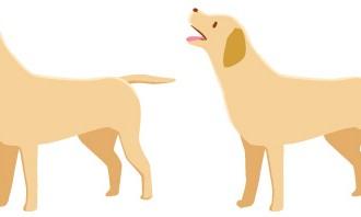 dog1_l